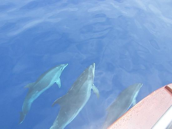 Atrio: Dolphins