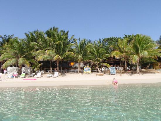 West bay beach picture of bananarama beach and dive for Roatan dive resort