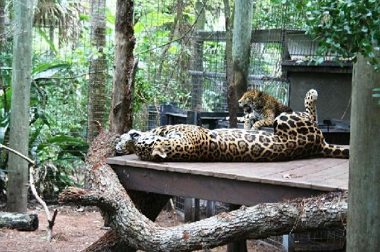 Brevard Zoo: Time for a nap