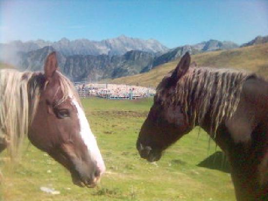 Medios Pirineos, Francia: the horses and the sheep :)
