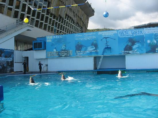 Yalta Intourist Hotel: The dolphin show at the aquarium