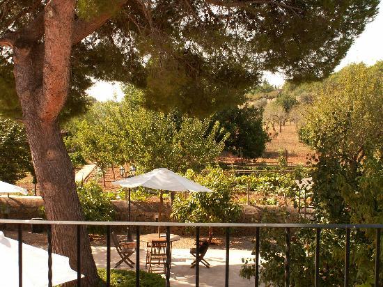 Agroturismo Alfatx: Courtyard