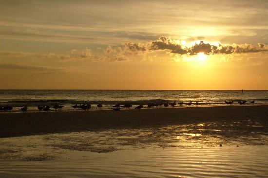 Island Garden Villas  Gulf Dr Holmes Beach Fl