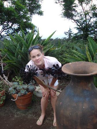 Ali'i Kula Lavender Farm: black plant