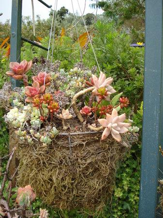 Ali'i Kula Lavender Farm: succulents