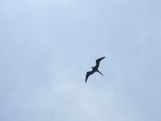 Cupecoy Bay, St Martin / St Maarten: Anybody know what type of bird this is?