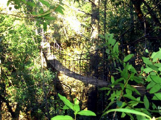 Mayacama Mountaintop Retreat / Clair de Lune Cottage: Suspension Bridge up to the hut
