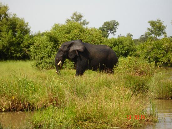Gana: More Elephants ant Mole National Park