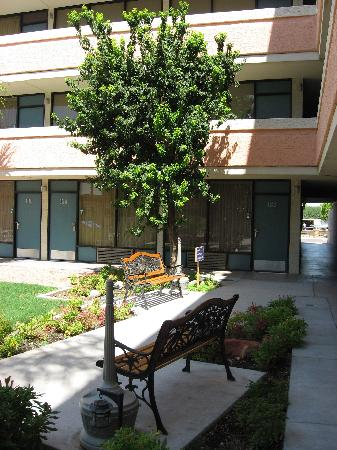 Quality Inn Phoenix Airport: open courtyard area just outside the pool fence.