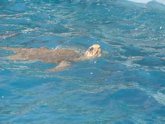 Katerina Palace Hotel : Turtle spotting