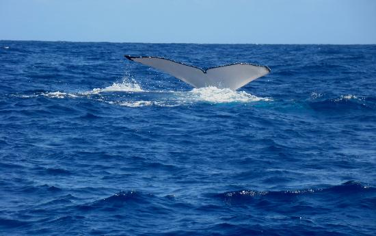 Foto de Dr. Poole's Dolphin and Whale Tour