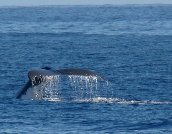 Temae Beach: Whale watching fare meherio motu temae Moorea