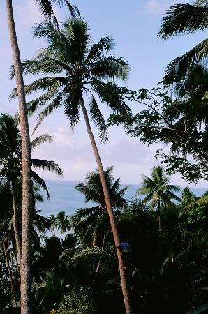 Lomalagi Resort ~ Fiji: Waisea is heading for the top for our coconut