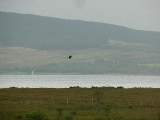 Discover Mull Tours: Is it a Buzzard or an Eagle?!