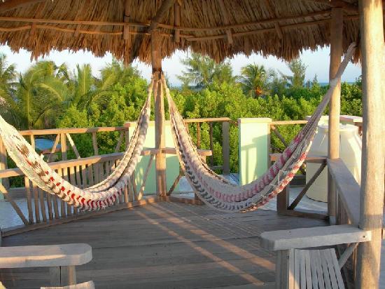 Thatch Caye Resort: hammocks - on roof of casita
