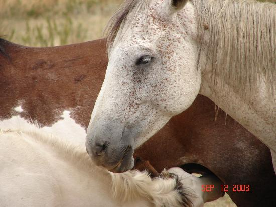 The Black Hills Wild Horse Sanctuary : another cute horse