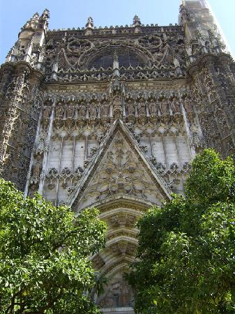 Patio De Los Naranjos Catedral Picture Of Seville Province Of