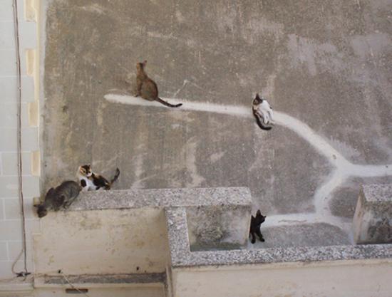 Gatti sui tetti delle case sul retro dell'hotel Juliani