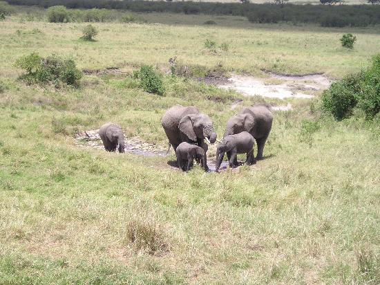 Sarova Mara Game Camp: Watering Hole