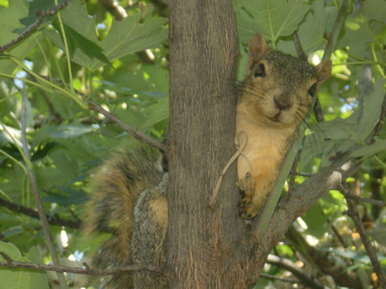 Boise, ID: Friendly squirrel who visited while I read