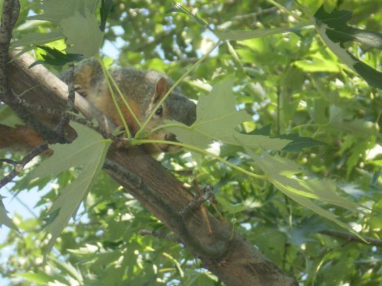 Morrison-Knudsen Nature Center : My friendly squirrel again