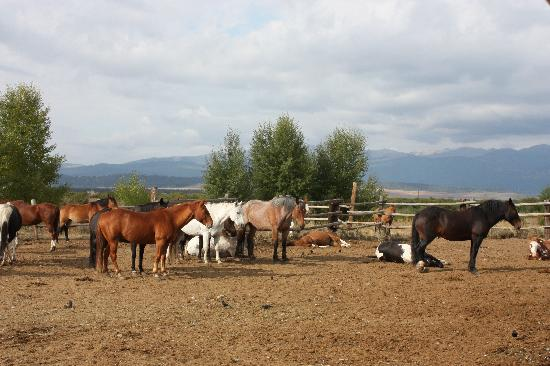 Parade Rest Ranch: horses