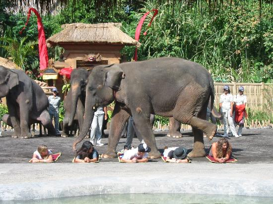 LadyBamboo Villa: No - That is not me under the elephants