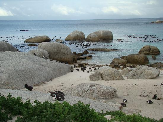 twentytwo: Penguin Colony - Just South of Simonstown