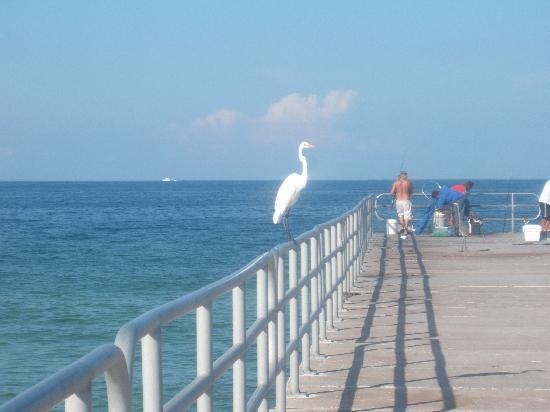 Manatee Public Beach Anna Maria Island Fl