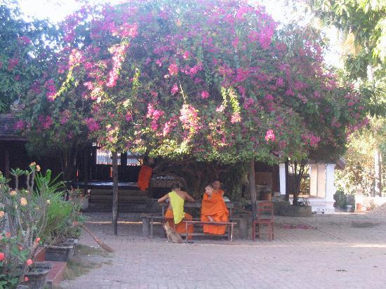 Oui's Guesthouse : Luang Prabang