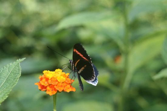 Kerzers, Suíça: papillon