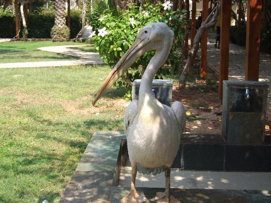 "Nissi Beach Resort: Pelican - ""Cheese"""