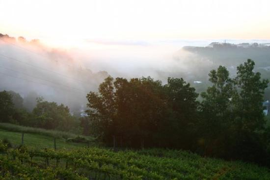 Hermann Hill Vineyard Inn & Spa and River Bluff Cottages: Another view of the sunrise and fog.