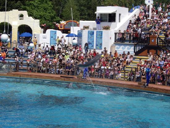 Parc Asterix: Dolphins