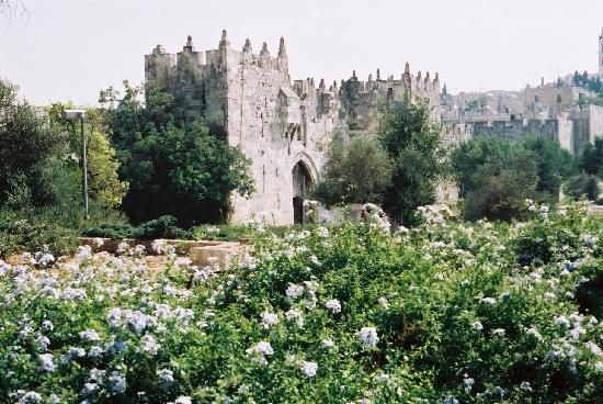 Jerusalén, Israel: Damascus Gate in a lush setting
