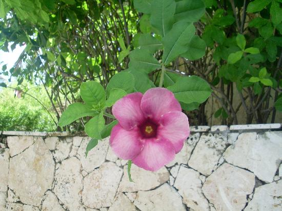 Hay unas flores preciosas y raras para mi Picture of Majestic