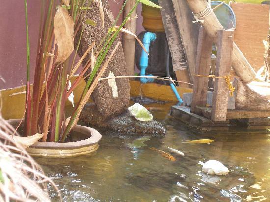 Roots Reggae House: The Aquarium