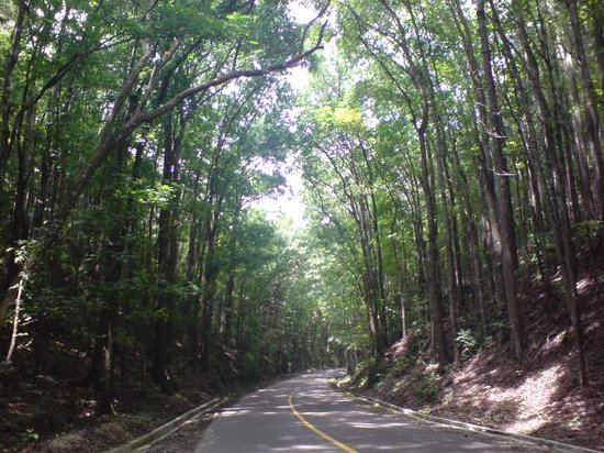 Bilar Philippines  city photo : Mahogany Forest Loboc, Philippines : Top Tips Before You Go ...