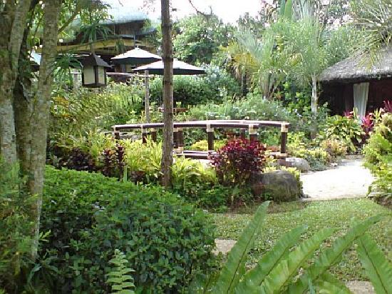 Nurture Wellness Village: View from the bar of the garder