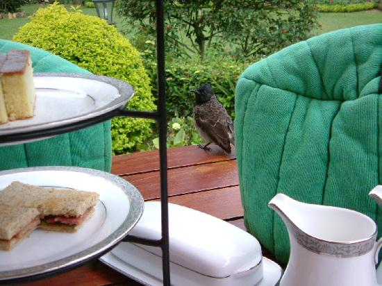 Ceylon Tea Trails: Afternoon tea with bird
