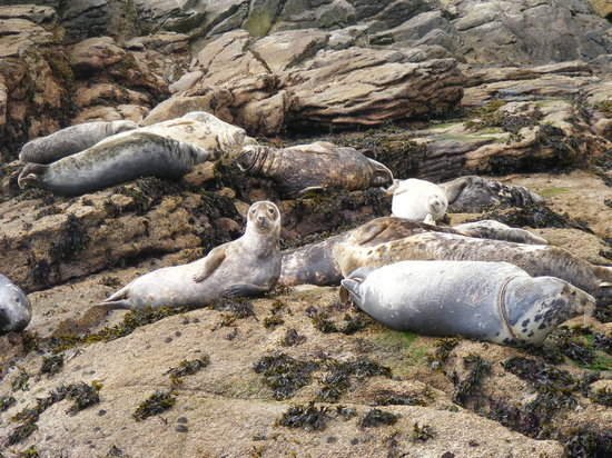 Isles of Scilly, UK : Seals on the Eastern Isles