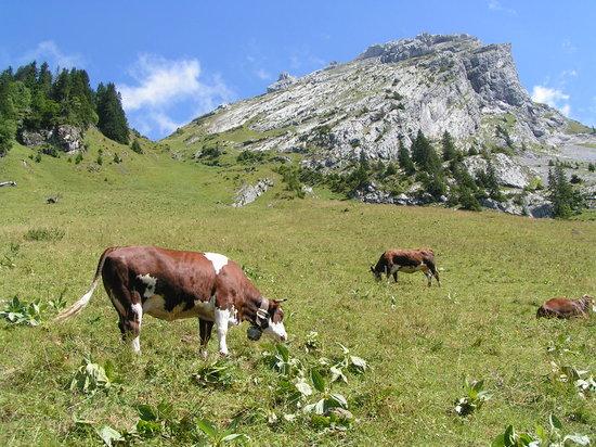 La Clusaz, Francja: L'alpage