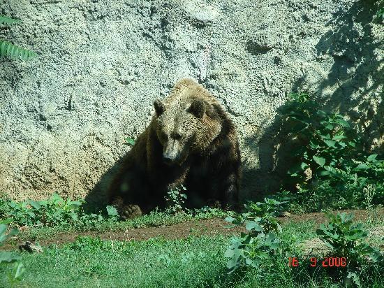 Filomena e Francesca B&B: Zoo in Villa Borghese