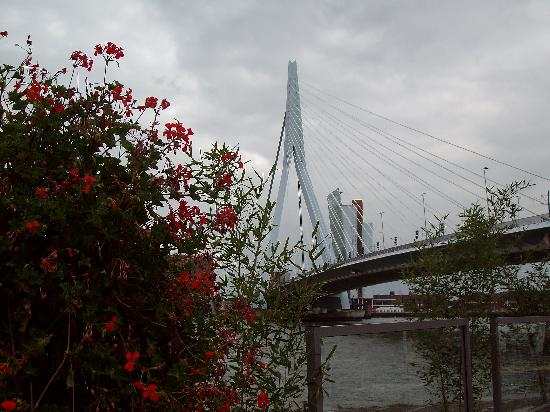 Erasmus Bridge: Erasmus