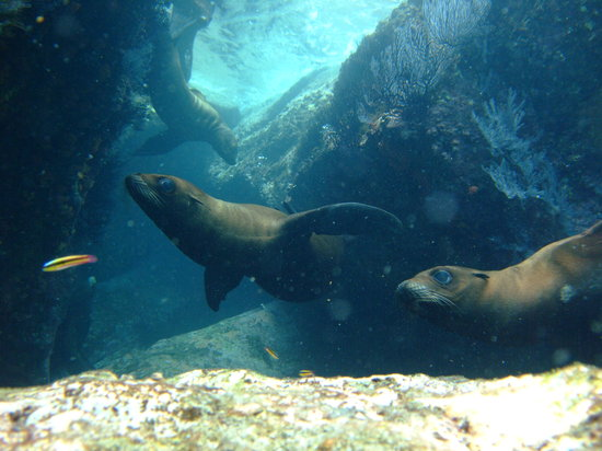 Baja California, Mexiko: スーイスイ泳いでます