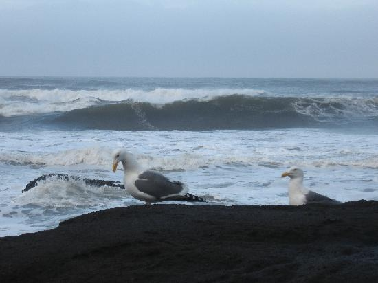 Wave Action- Yachats