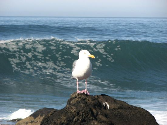 Waves and Birds- Yachats.