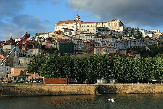Flor de Coimbra