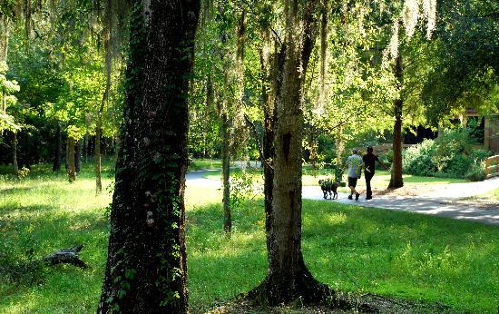 Lettuce Lake Regional Park: dog walking