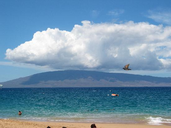 LocationPhotoDirectLink G60634 D114075 I18528230 Sheraton Maui Resort Spa Lahaina Maui Hawaii